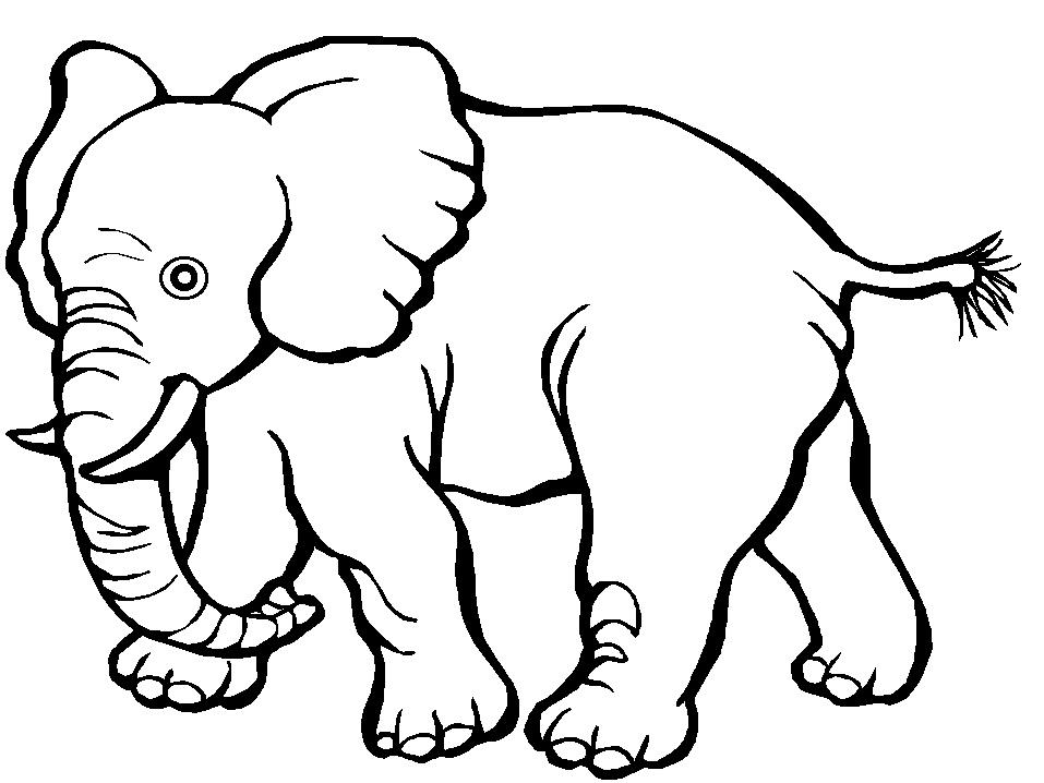 La Zoo Planse De Colorat Copii și Mame